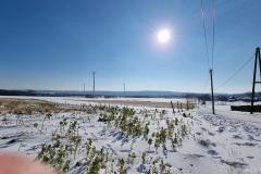 winter2021_08