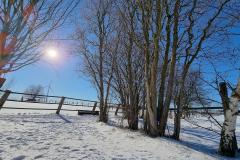 winter2021_11