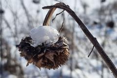 winter2021_12